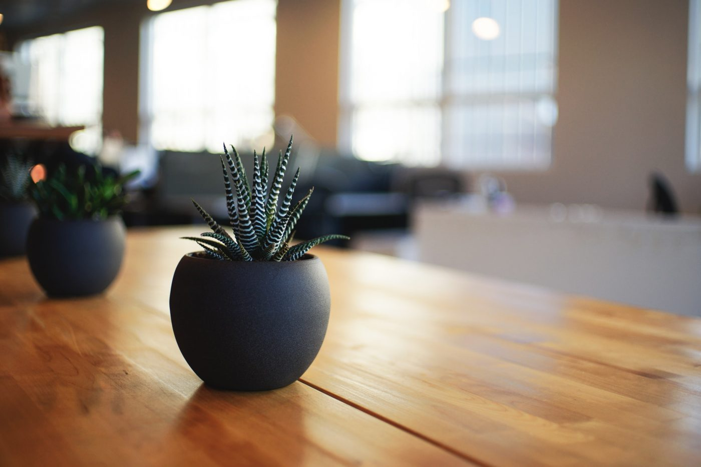 Succulent - How To Hygge Your Home - The Electric Blind Company